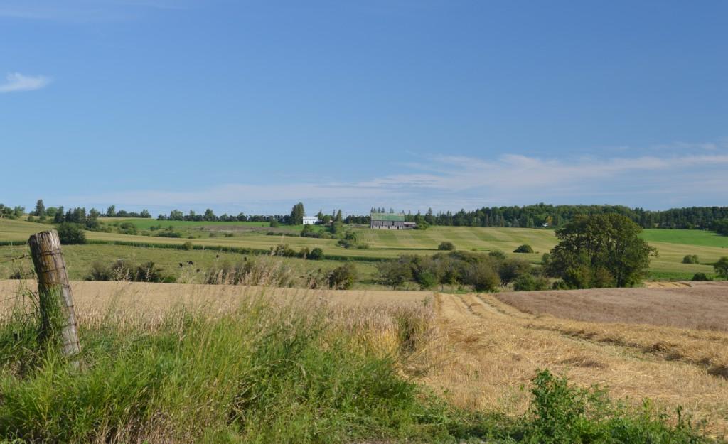 typical farmland west of Highway #400